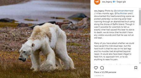 La foto dell'orso polare in fin di vita pubblicata su Instagram