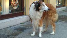 Penny, cagnolina anziana rimasta senza amico umano