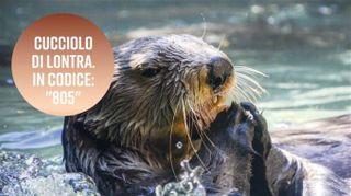 Il nome più bizzarro per una lontra è...