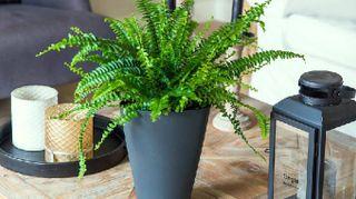 Sei piante da interni che decorano e purificano l'aria