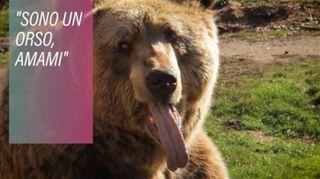 Il Kosovo salva i suoi orsi da una vita di sofferenze