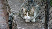 Gatto di strada in una foto L.Gallitto