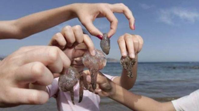 Le meduse proliferano alle nostre latitudini grazie al clima e alla carenza di predatori