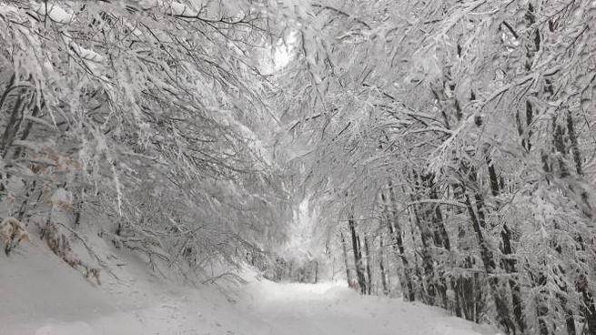 Previsioni meteo, temperature da brivido la prossima settimana (foto Dire)