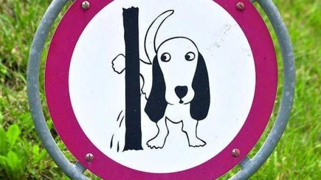 Chivasso, multe a chi non pulisce la pipì dei cani