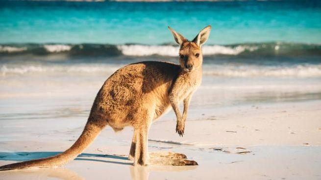 Le foto dell'Australia che hanno raccolto più like
