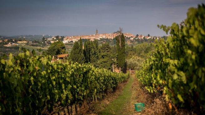 Terre di Pisa, tra souvenir e benessere
