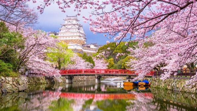 La fioritura dei ciliegi in Giappone è uno spettacolo unico al mondo