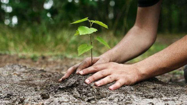 Piantare nuovi alberi contribuisce a compensare le emissioni di CO2