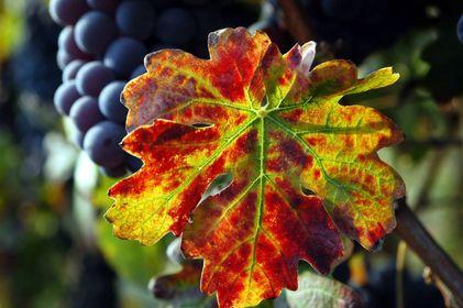 Tipicità Piemonte: il regno del tartufo e di vini da leggenda