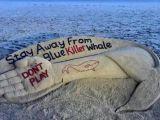 La lunga scia della Blue Whale: morti e inchieste