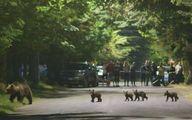 Trento, orsa salva per ora  Accolto il primo ricorso