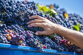 Dossier  Agroeconomy