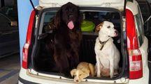 Cani in auto in una foto di repertorio L.Gallitto