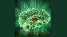 Rappresentazione grafica del cervello (Ansa)