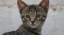 Gattino in una foto L.Gallitto