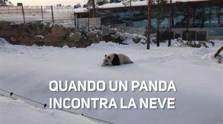 I panda scoprono la neve ed ecco cosa succede