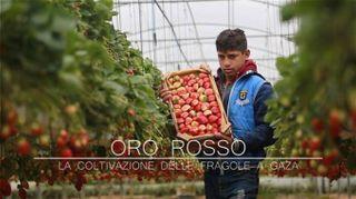 Le fragole di Gaza: un futuro (rosso) dorato