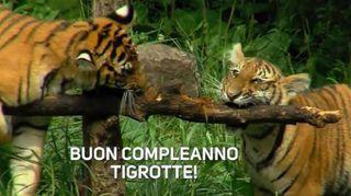 Buon compleanno piccole tigri!