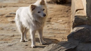 Cane randagio in una foto L.Gallitto