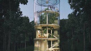 La casa in vetro costruita intorno all'albero