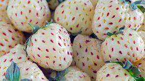La fragola bianca, nota anche come pineberry - Foto: jack_lisbon/iStock