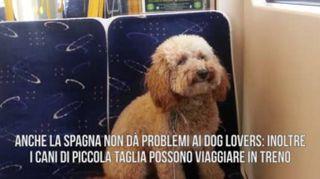 Le migliori mete per chi viaggia con un cane