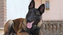 Raja, il cane scomparso (Facebook)
