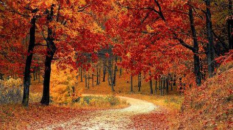 Foliage nel Lazio