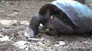 Ritrova la tartaruga gigante Chelonoidis Phantasticus