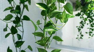 Le piante giuste per decorare il bagno