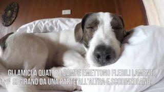 Sai cosa sognano davvero i cani?