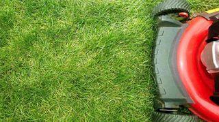 Manutenzione giardino: il taglio del prato in estate